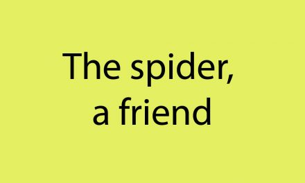 The spider, a friend